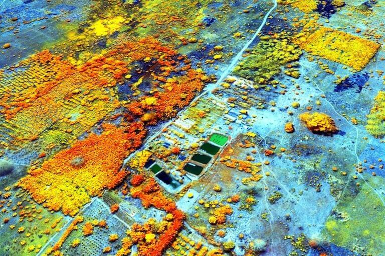 Multispectral image from mapping drone